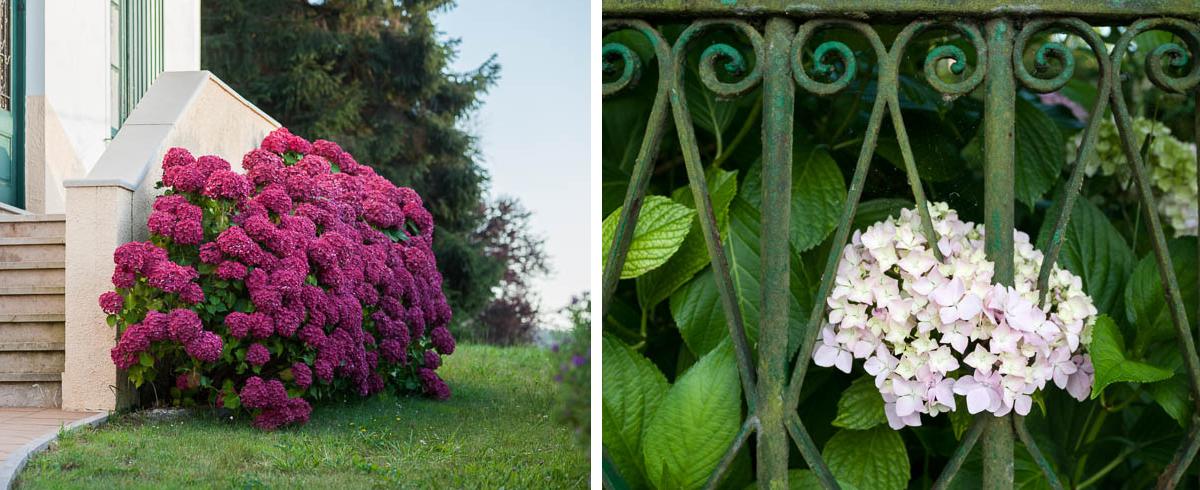 el color de las hortensias a juego con la casa o viceversa casa sanzo en boal