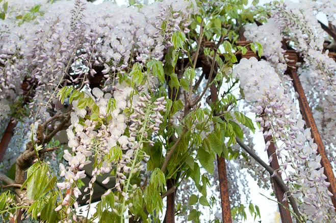 flores-como-lagrimas-ea3abd
