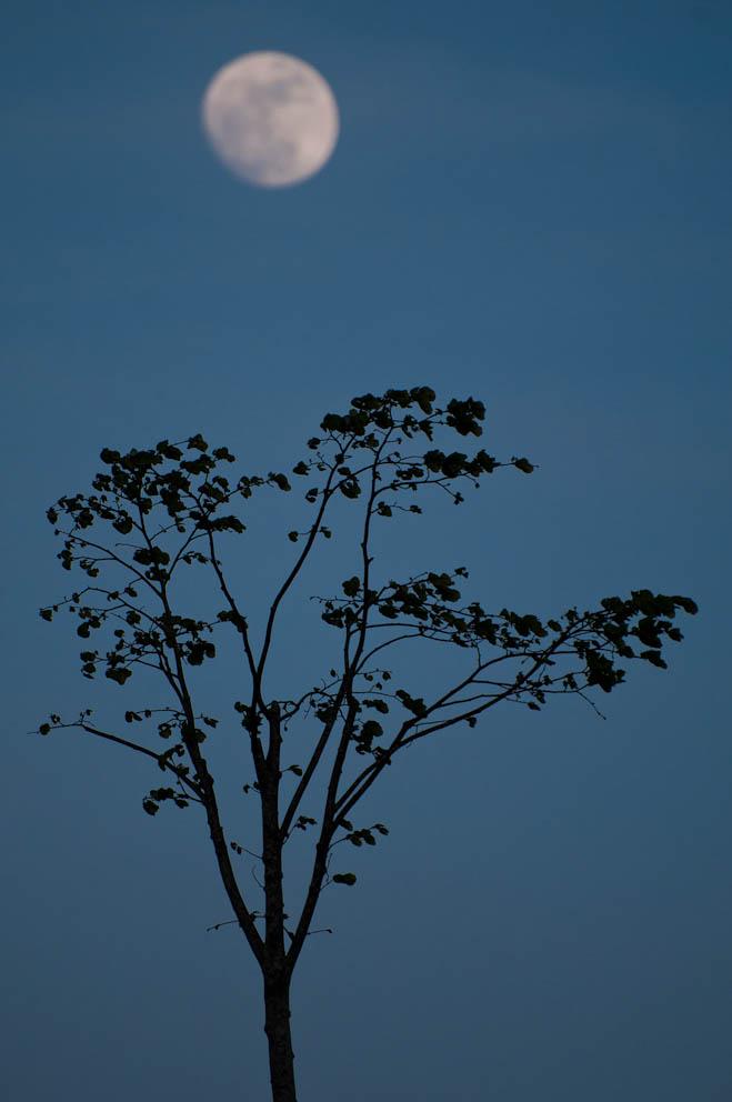 luna-llena-1d0530