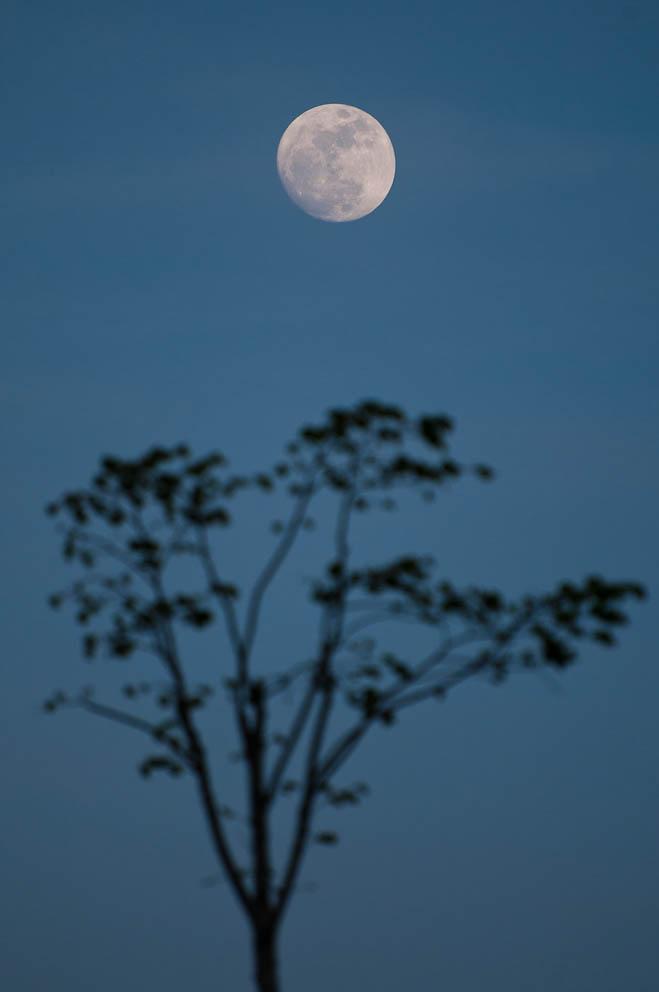 luna-llena-5da37b