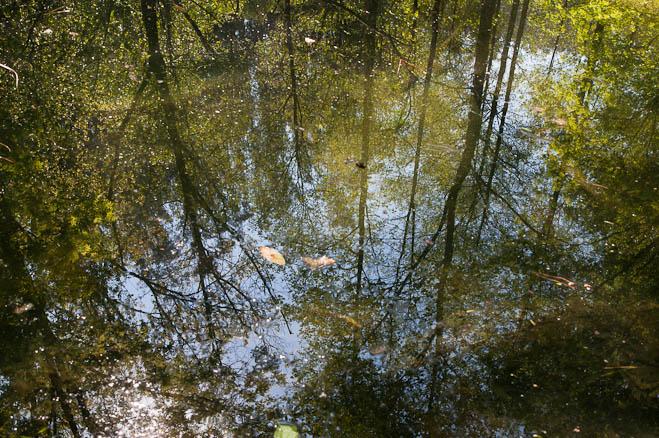 sonidos-de-agua-88bf7e