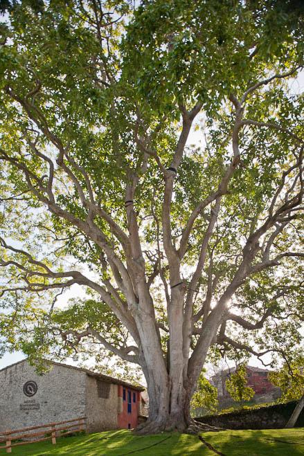 plantar-un-arbol-42ca21