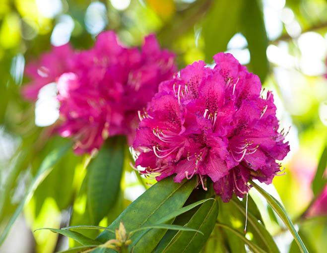 algunas-flores-2be67d