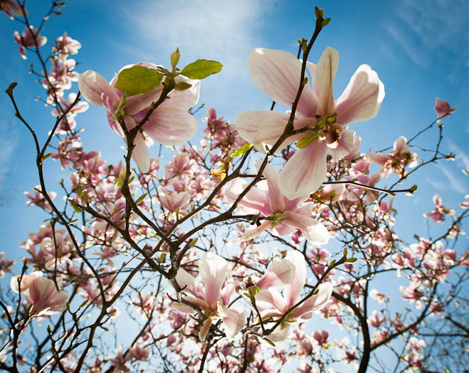 algunas-flores-43288c