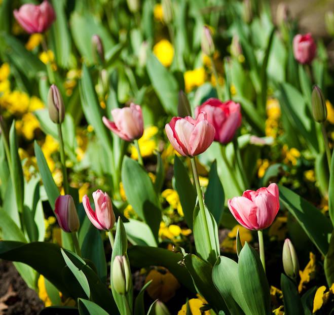 algunas-flores-86ae62