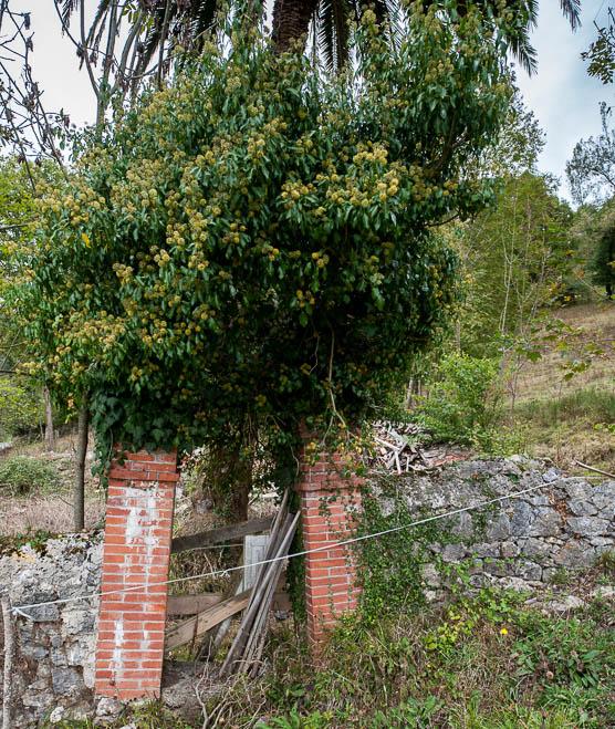 villa-herminia-c71de5
