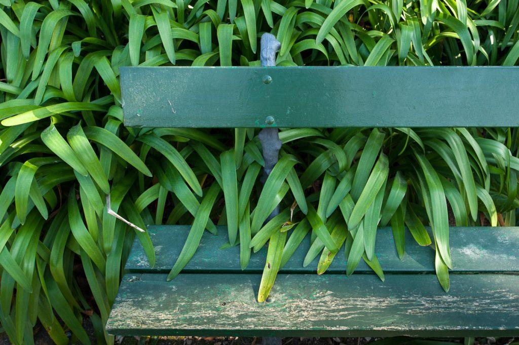 Agapantos en un banco del Parque Vicente Loriente Acevedo