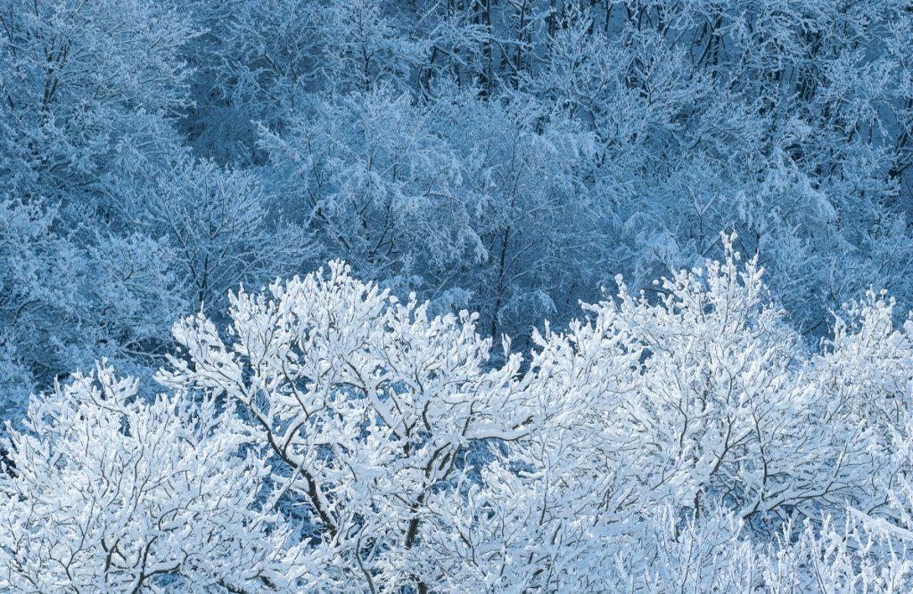 Bosque nevado en Asturias