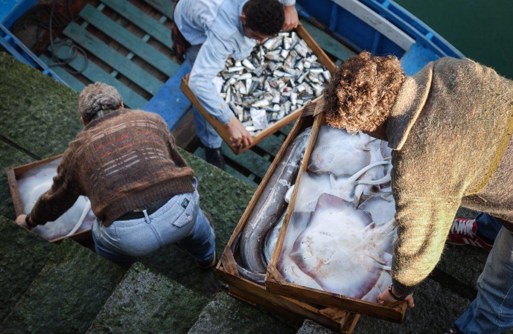 Descarga de cajas de pescado en el puerto de Luarca, Asturias