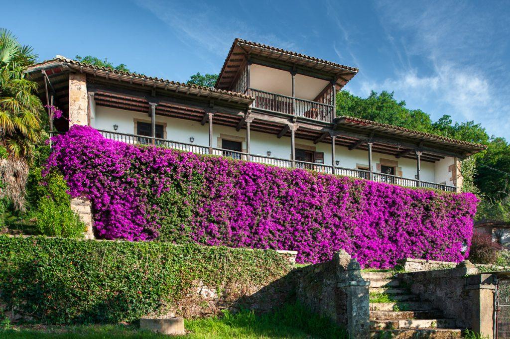 El Palacio del Marqués del Real Transporte en verano, con la gran buganvilla cubriendo su fachada
